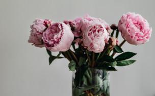 ваза, пионы, букет