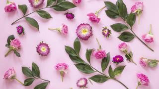 хризантемы, розы