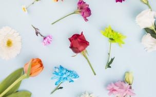 розы, тюльпан, хризантемы, гербера