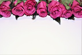 бутоны, розовые