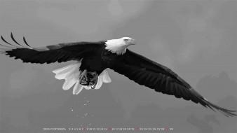 полет, хищник, орел, птица, calendar, 2019