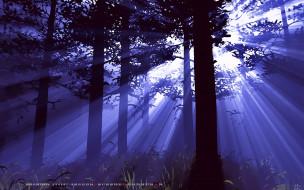 calendar, 2019, природа, растение, дерево, лес, трава
