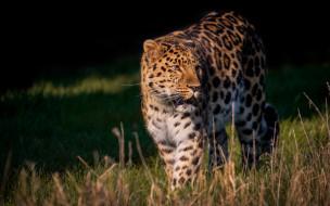 обои для рабочего стола 2880x1800 животные, леопарды, леопард