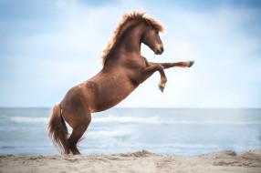 животные, лошади, лошадь