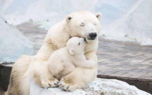 животные, медведи, медведь