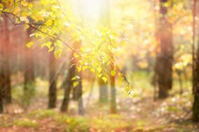 природа, лес, лучи, ветка