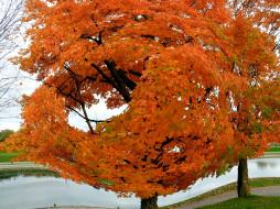 обои для рабочего стола 2560x1920 природа, деревья, осень