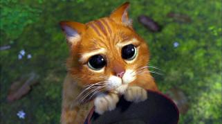 кот, шляпа, глаза
