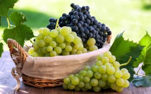 ягоды, виноград, грозди