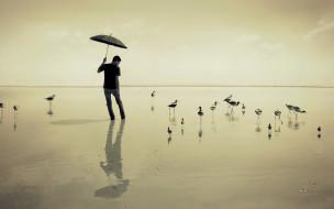 эмоции, пиджак, парень, зонт, вода, актер, птицы