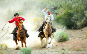 лассо, шляпа, лошадь, ковбой