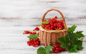 красная, ягоды, корзинка, смородина