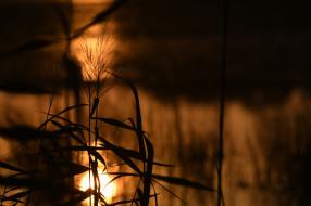 природа, макро, листья, стебли, растение, силуэт, солнце, свет