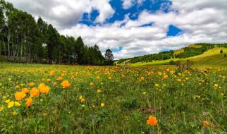 холм, цветы, лето, луг