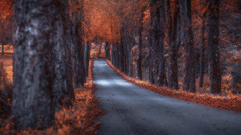 осень, дорога, листопад