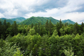 сихотэ- алинь, природа, горы, сихотэ-, алинь, россия, приморье, лес