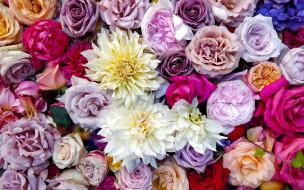цветы, разные вместе, георгины, розы