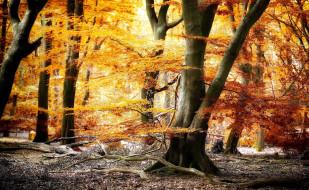 обои для рабочего стола 2048x1263 природа, лес, листопад, осень