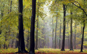 природа, лес, осень, листопад