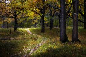 природа, лес, тропинка, трава, деревья
