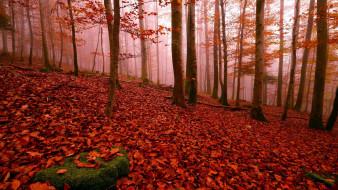 обои для рабочего стола 2560x1440 природа, лес, листопад, осень