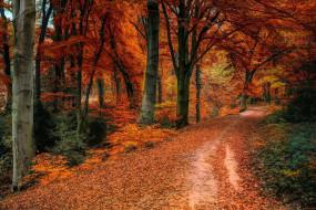 природа, лес, листопад, осень