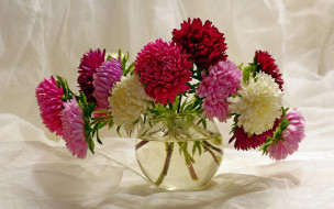 цветы, астры, букет