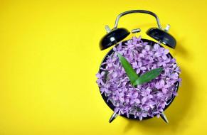 будильник, сирень, лиловый