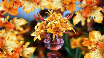 лилии, листья, оранжевый, осень