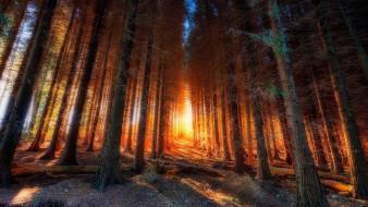 природный парк в бискайе,  испания, природа, лес, испания