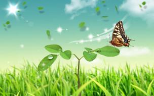 бабочка, росток, трава