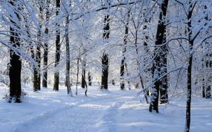 сугробы, зима, снег