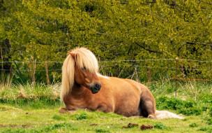 животные, лошади, природа, грива, трава, лошадь