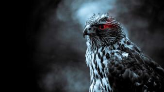 животные, птицы - хищники, орел, птица, клюв, красный, глаз, хищник