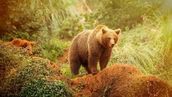 животные, медведи, медведь, красота, природа, трава