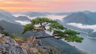 природа, горы, красота, панорама, туман, южная, корея, одинокое, дерево