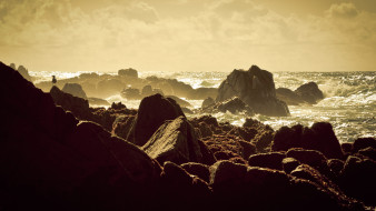 природа, побережье, камни, чайка, прибой, скалы, море