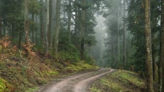 природа, лес, шварцвальд, германия