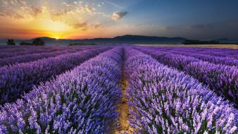 Франция, Лавандовые поля в Провансе