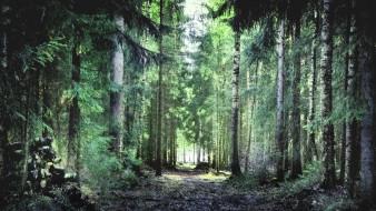 природа, лес, тропа, деревья, финский