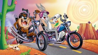 мультфильмы, looney tunes, багз, банни, тасманский, дьявол