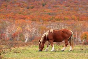 обои для рабочего стола 3000x2000 животные, лошади, лес, пастбище, осень, бурая, лошадь
