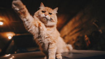 животные, коты, кот, лапка