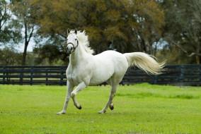 животные, лошади, ограда, белый, конь, поляна