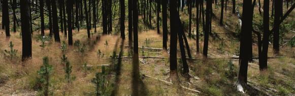 природа, лес, бревна, холмы