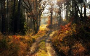 природа, дороги, лесная, дорога, деревья, осень, листопад