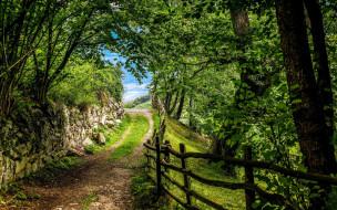 природа, дороги, дорога, забор, деревья