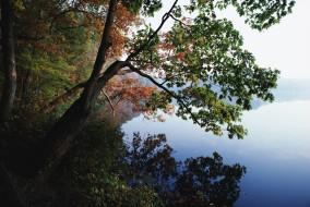 природа, побережье, деревья, берег, озеро, осень