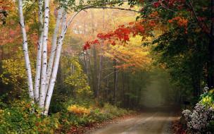 природа, дороги, дорога, деревья, осень, листопад