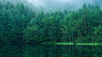 природа, лес, япония